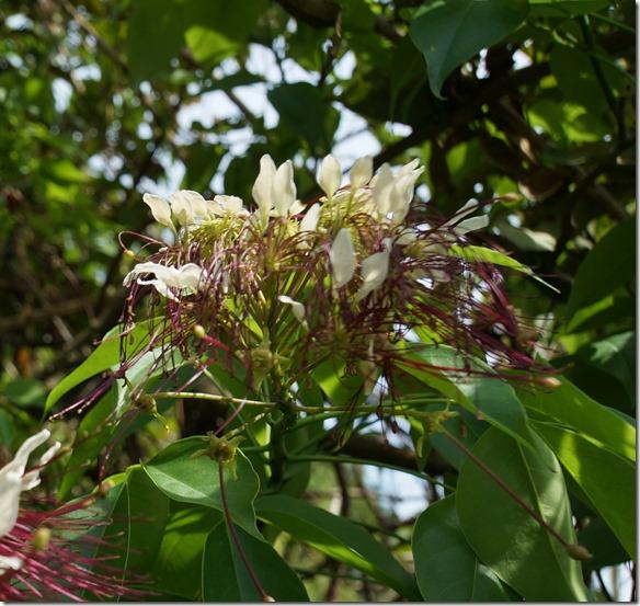b2058 der Urwald bringt wunderschöne Blüten hervor welche die Insekten für Nahrung anfliegen