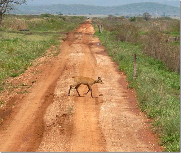 b2064 die Tiere benützen diese Strassen für ihren Wechgsel