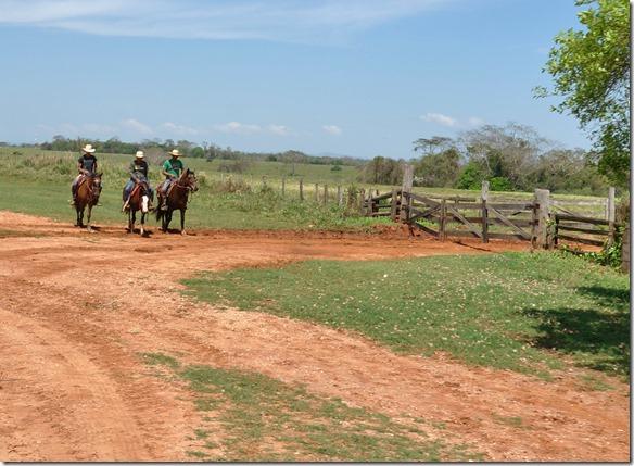 b2074 die Farmarbeiter (Gautchos) kommen immer hoch zu Ross für die Arbeit