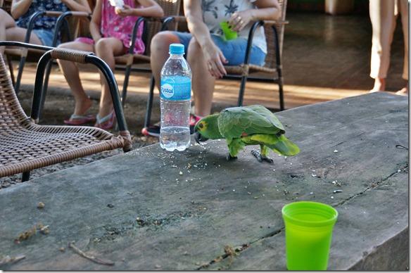 b2116 nach der Rückkehr auf die Fazienda gibt es Kuchen und Getränke, aber Achtung die Papageien sind sehr scharf auf den Kuchen auch wenn man den in der Hand hält und abbeissen möchte greifen sie zu