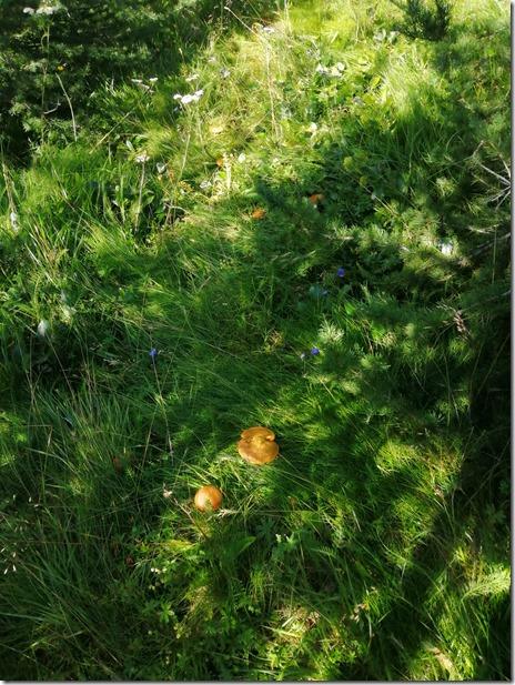 1996 überall stehen sie im lichten Wald. Der Wald ist geschützt, darum lasse ich auch die pilze stehen damit der Wald nach der Abholzung vor ca 300 Jahren sich wieder erholen kann