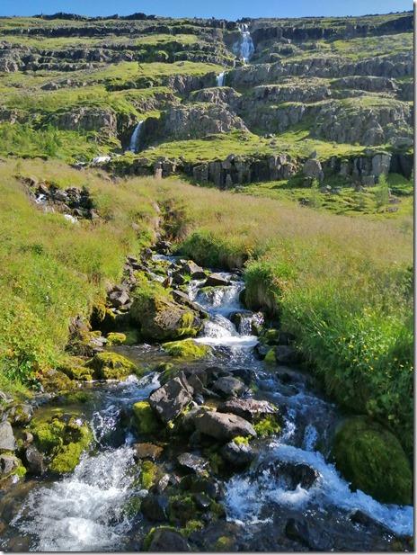 1997 Wasser gibt es genug und so kann, wenn sich Humus gebildet hat auch wieder eine gute allgemeine Vegetation entstehen